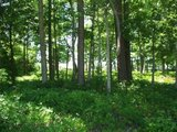 2 Nice Residential Lots, Mobile Home or Duplex in Camp Lejeune, North Carolina